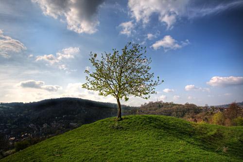 arbol-solitario-dia-medio-ambiente
