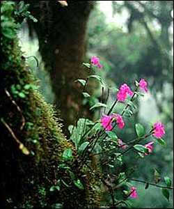 biodiversidad4