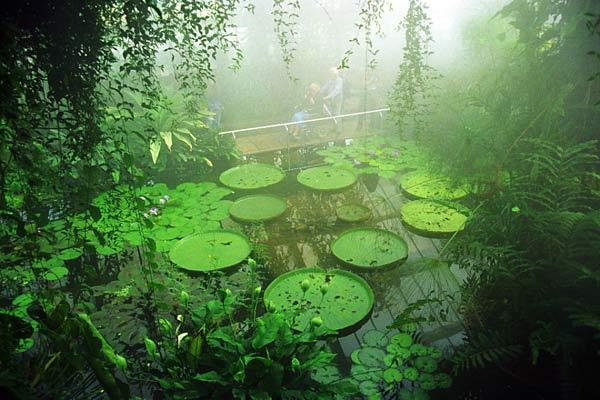 Sol Monasterio Mundo Vegetal Seres Sensitivos Y Emocionales