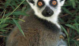 Los mamíferos desembarcaron en Madagascar