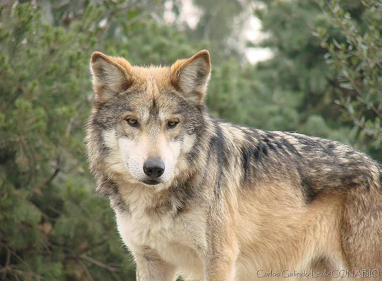 Lista animales salvajes yahoo dating 9