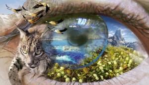 ojo_naturaleza_web-300x1731