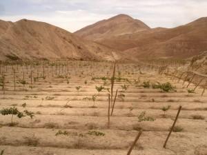 vid-desierto-300x2251