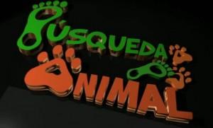Búsqueda-animal