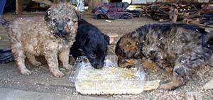 Cómo elegir los alimentos para perros adecuados