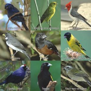 aves-en-extincion