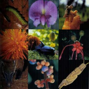biodiversidad[1]