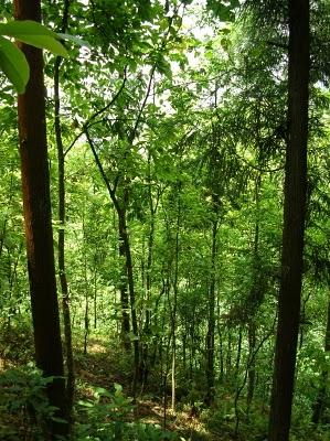 bosque_nepal