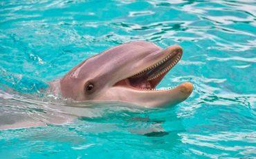 Parecidos de los delfines y los humanos
