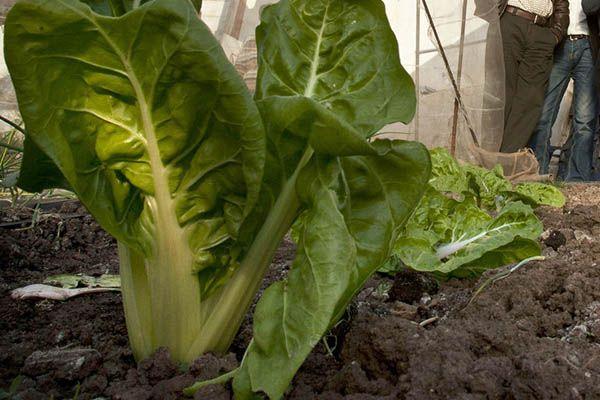 Huella de carbono y alimentos