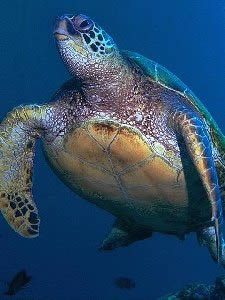 turtles_green